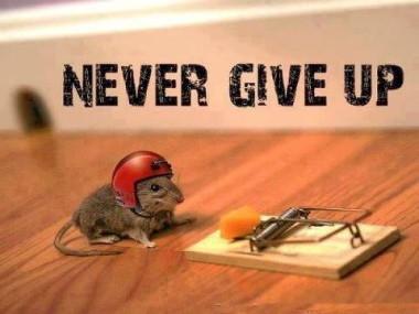 muis bij kaas met helm  Never give up